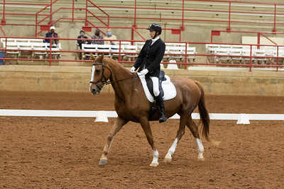 Horse 139