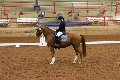 Horse 145