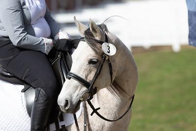 Freedom Farms Equestrian Center