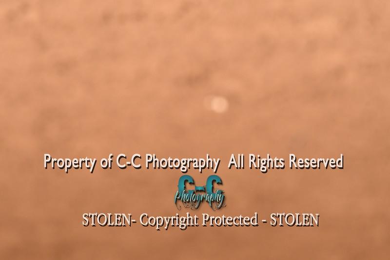 CCC_6596