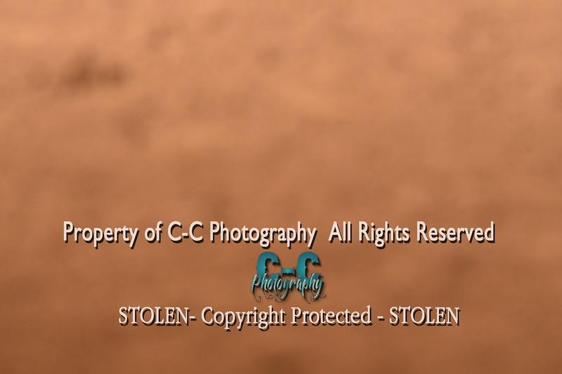 CCC_6605