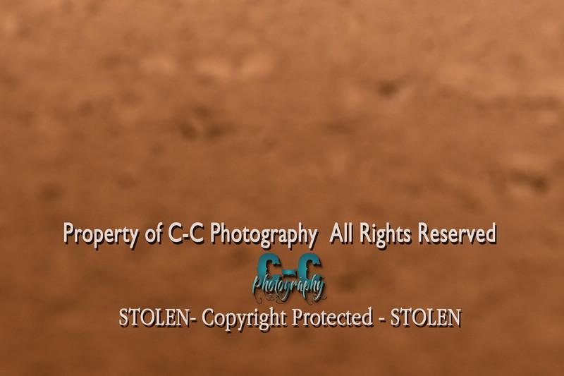 CCC_7593