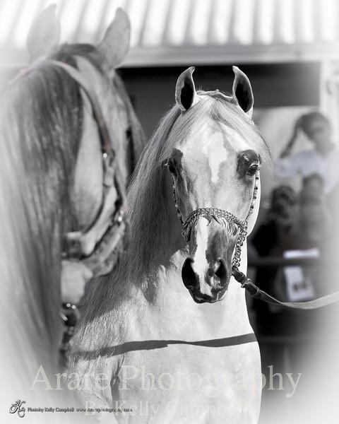 AFT Arabian Expressions-2629