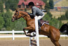 Hunter Jumper