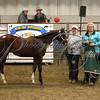 15 High Selling colt