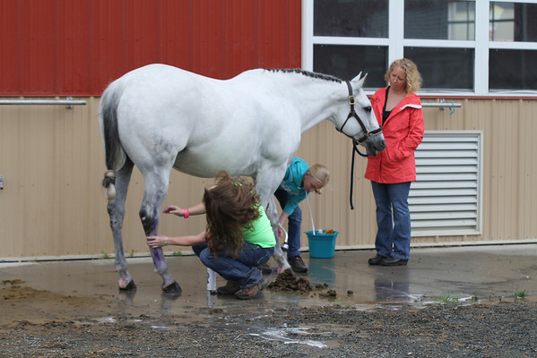Mass Quarter Horse May 2013