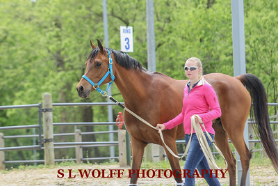 2016-05-08-MEADOWS-CANDID-1545
