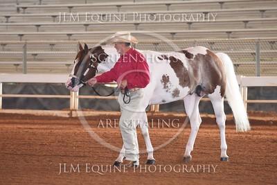 NGPHC 715 - 3yr old / Aged Stallions