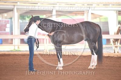 NGPHC 715 - Sr. Amateur Stallions