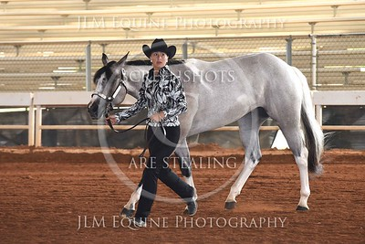 NGPHC 715 - Two Year Old Geldings