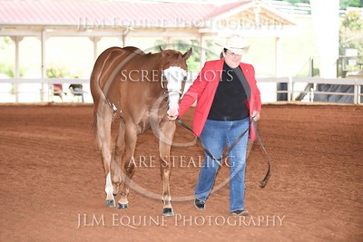 NGPHC 715 - Yearling Geldings
