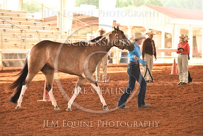 16 Two Year Old Mares