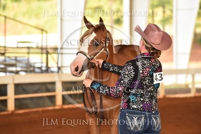 8 Grand & Reserve Stallions