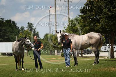 Grey Horse Mini | GHF Show July 2013