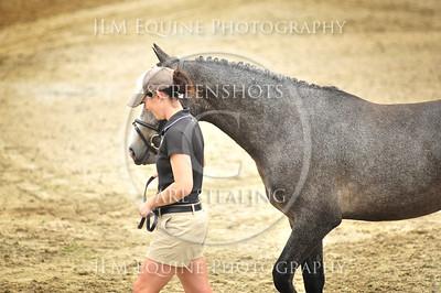 YHSS - Chatt Hills - June 2014 - #16 Ruby King Sparrow - Nancy Buchanan