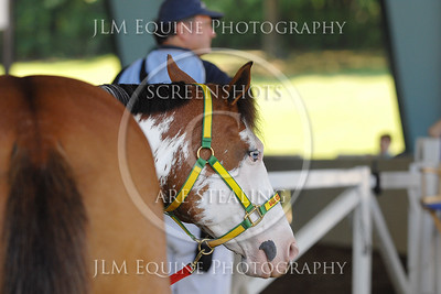 RHSC May 23rd 2015 - 68 Paint Mare