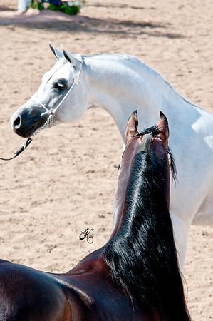 Scottsdale 2011-8240 copy