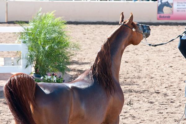Scottsdale 2011-8189 copy