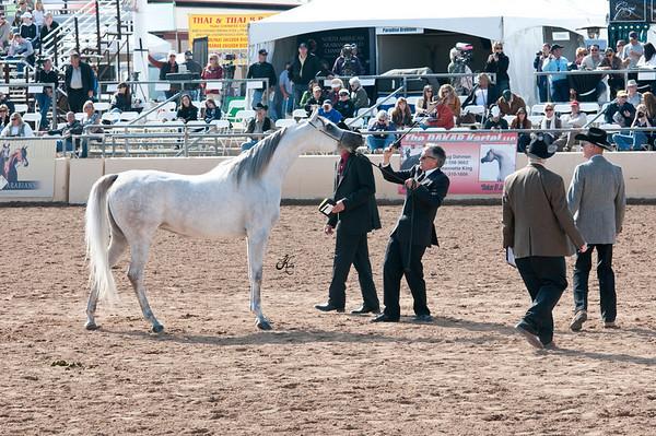 Scottsdale 2011-7568 copy