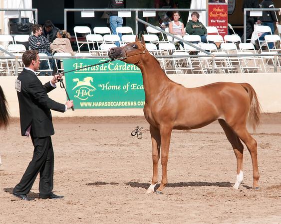 Scottsdale 2011-0809 copy