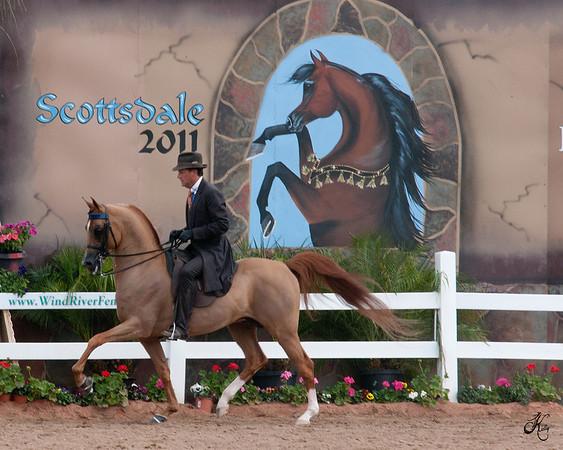 Scottsdale 2011-8593 copy