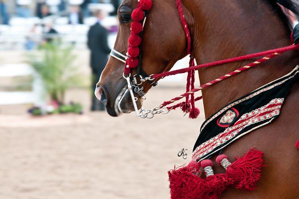 Scottsdale 2011-8550 copy