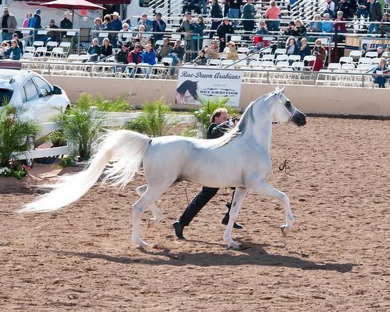Scottsdale 2011-8300 copy