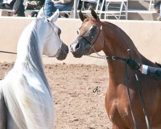 Scottsdale 2011-8273 copy