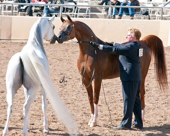 Scottsdale 2011-8274 copy