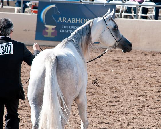 Scottsdale 2011-7554 copy