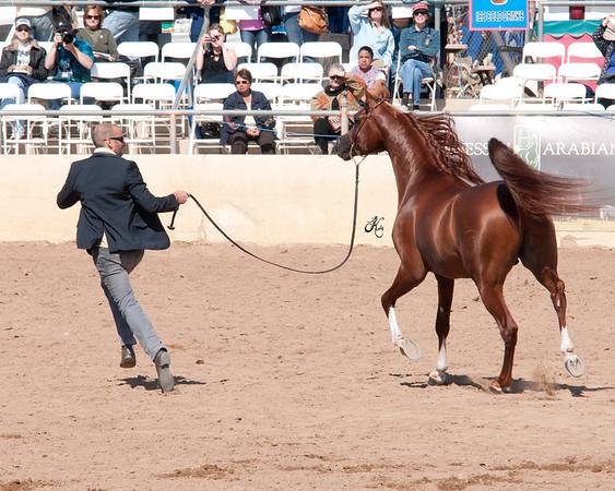 Scottsdale 2011-7787