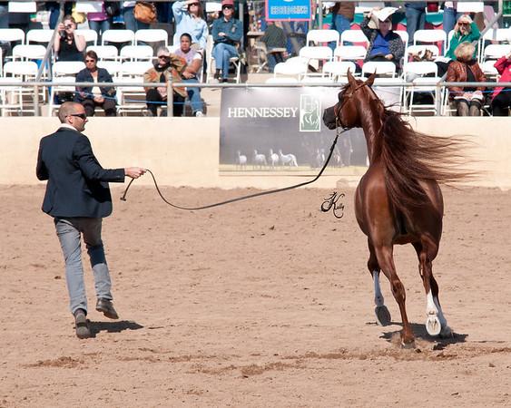 Scottsdale 2011-7786