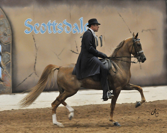 Scottsdale 2011-8845 copy