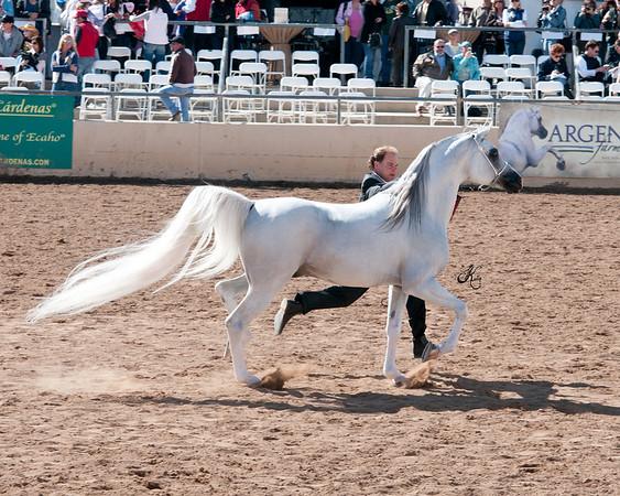 Scottsdale 2011-8305 copy