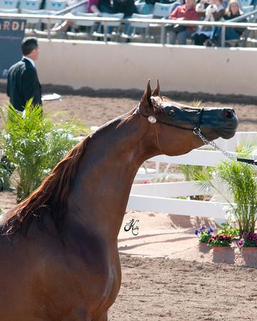 Scottsdale 2011-8178 copy