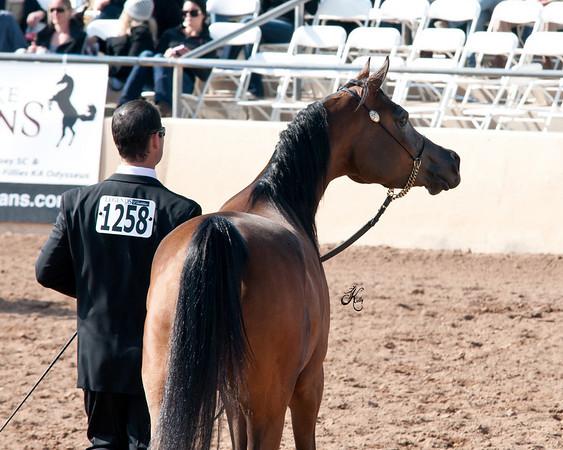 Scottsdale 2011-7557 copy