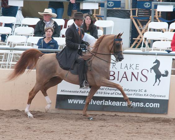 Scottsdale 2011-8625