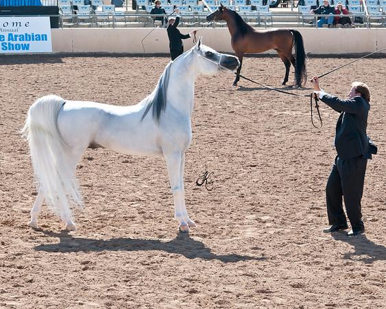 Scottsdale 2011-8205