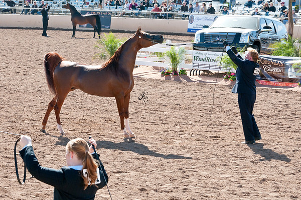 Scottsdale 2011-8172