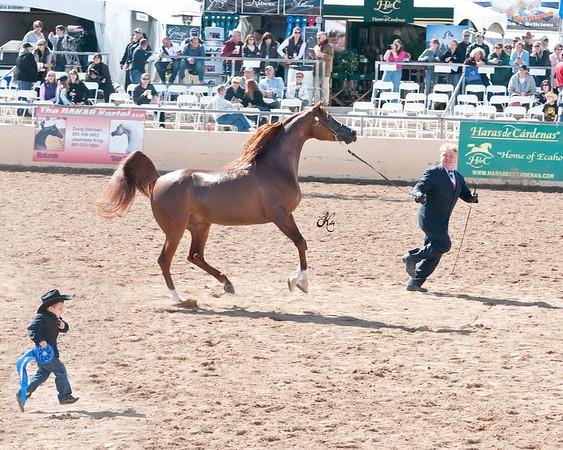 Scottsdale 2011-8316