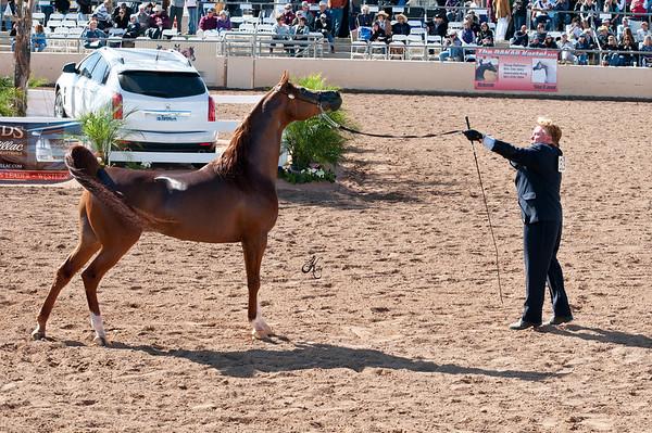Scottsdale 2011-8182