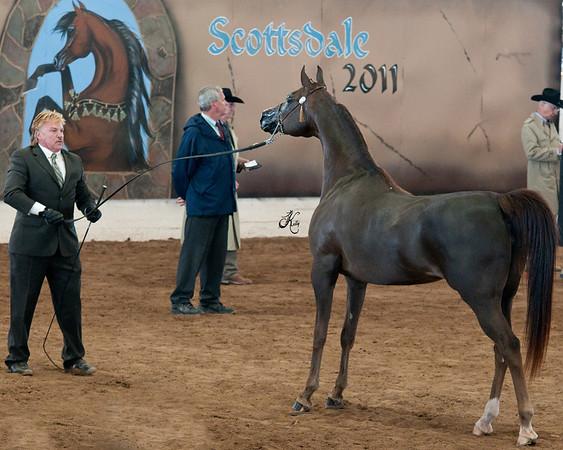Scottsdale 2011-0335 copy