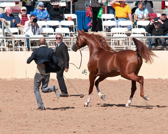 Scottsdale 2011-7792
