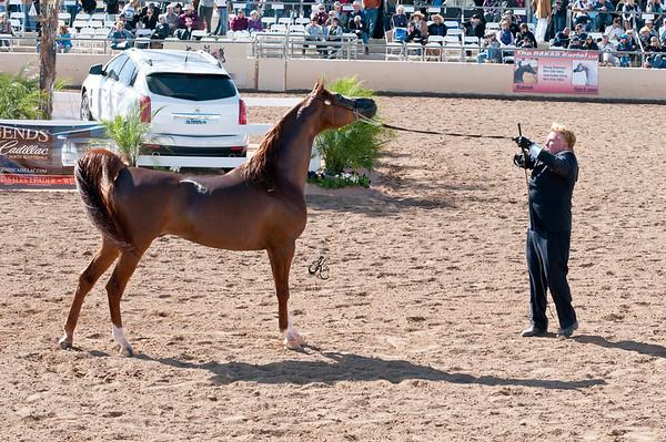 Scottsdale 2011-8180