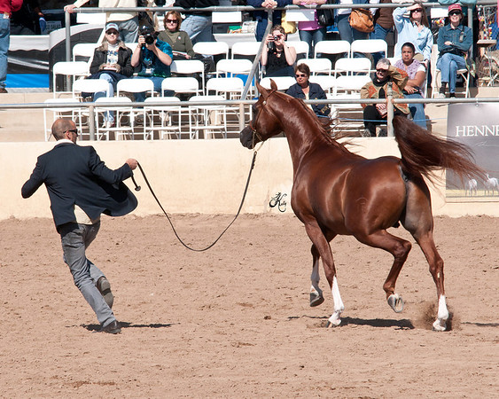 Scottsdale 2011-7789