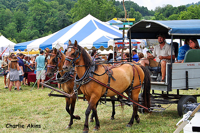 Horse-drawn carriage ride by Spring Valley Farm