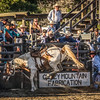BT Rodeo 20175800-Edit