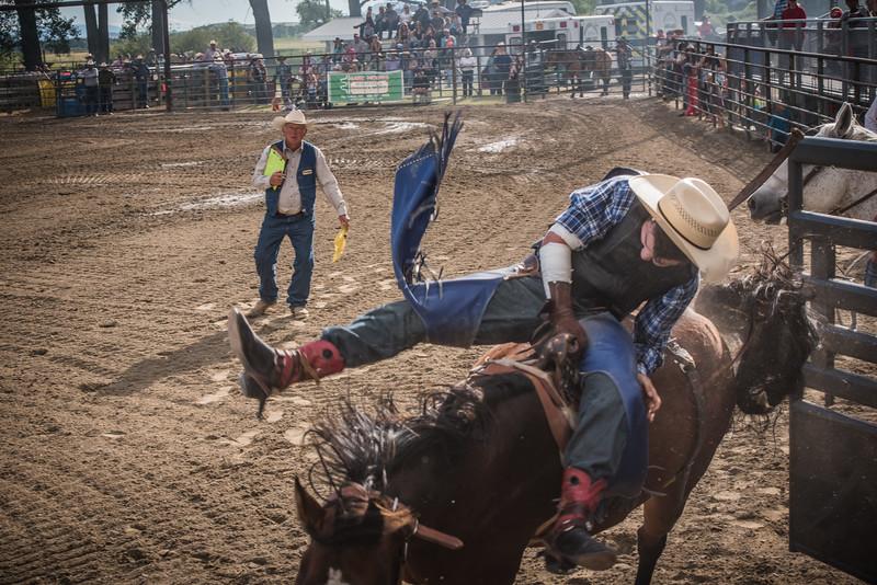 BT Rodeo 20175289-2