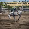 BT Rodeo 20175298