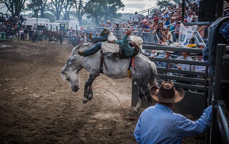 BT Rodeo 20177077-Edit